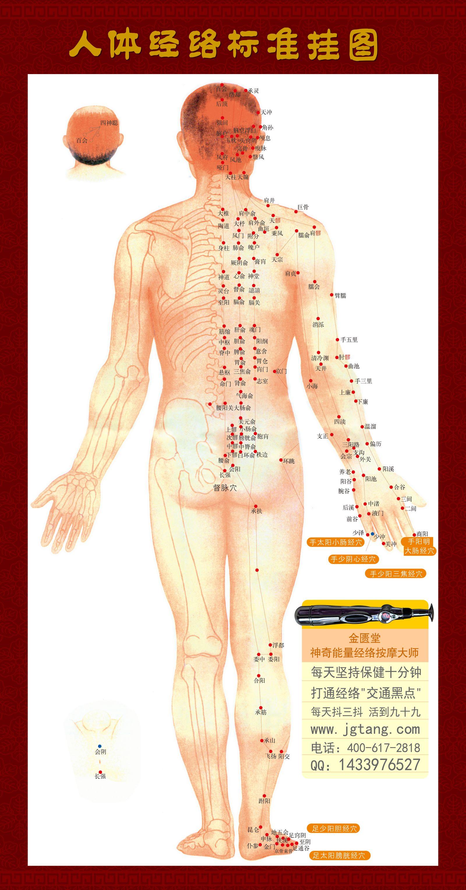 人体12经络图解 经络图解大图 人体12条经络图解