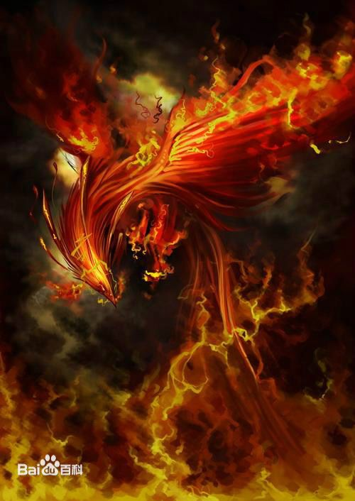 Cat Fire Gif