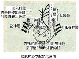 排尿 (はいにょう) - Japanese-English Dictionary - JapaneseClass.jp Repudiate Meaning