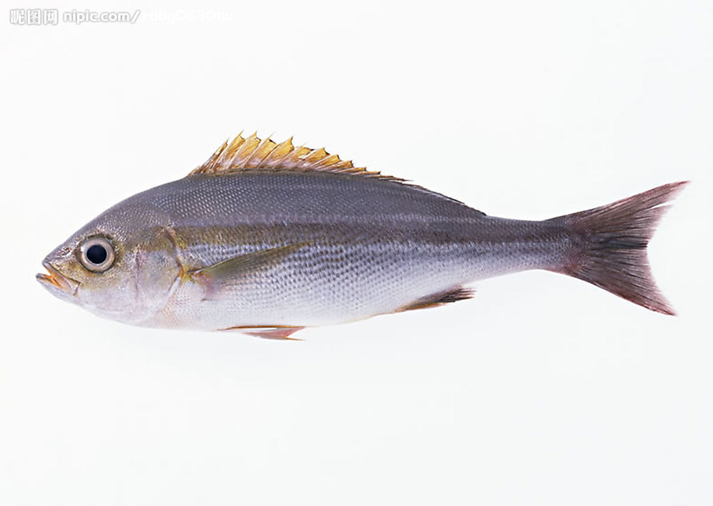 做鱼的大肥