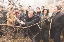 李保国现场指导果农剪枝技术