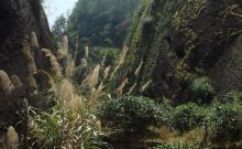 细说武夷山的武夷岩茶