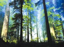 湖北南河省级自然保护区