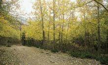 苏峪口国家森林公园自然风景
