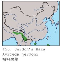 褐冠鹃隼(分布图)