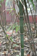 晾衫竹(图1)