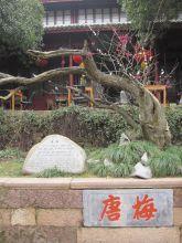 2011年03月12日孙大俊拍摄的唐梅