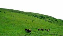 黄安坝高山牧场