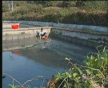 清理鳖池、让鳖两栖活动、冬眠