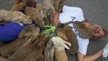 大久野岛上的兔子
