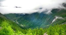 达古冰川内的原始森林