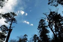 鞍子河保护区图片