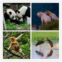 Giant panda, twisted horn, golden monkey, black stork