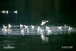 孔目湖湿地公园风景