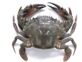 动物 甲壳类 268_201图片