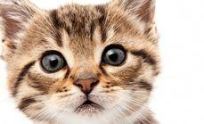 宠物猫咪美容套餐