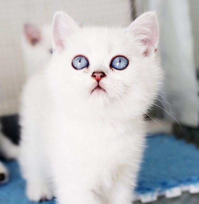 武汉COCO猫舍