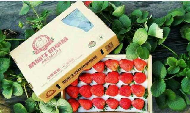 昊昊草莓采摘园(密云店)