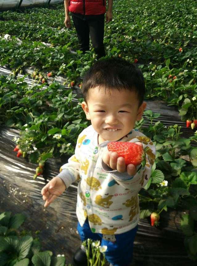 亮民草莓园