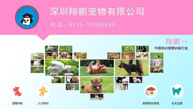 翔鹏宠物警犬训练学校
