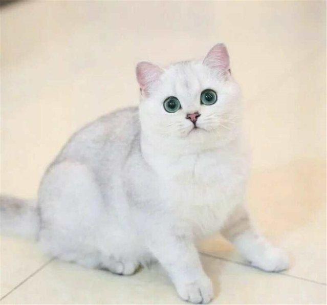 杰西宝贝猫舍