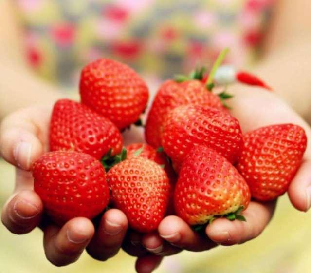 信怡园草莓采摘园(白鹿原店)