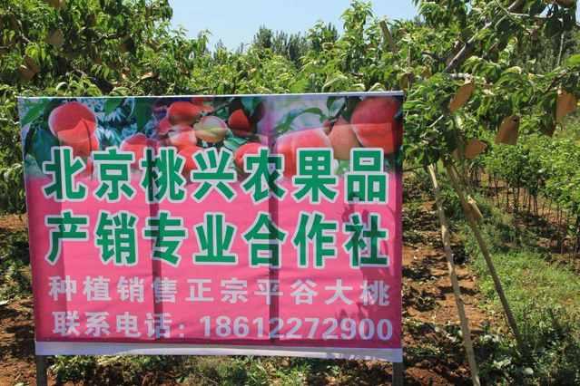北京桃兴农果品产销专业合作社(平谷店)