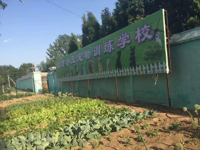 北京小玉宠物训练学校