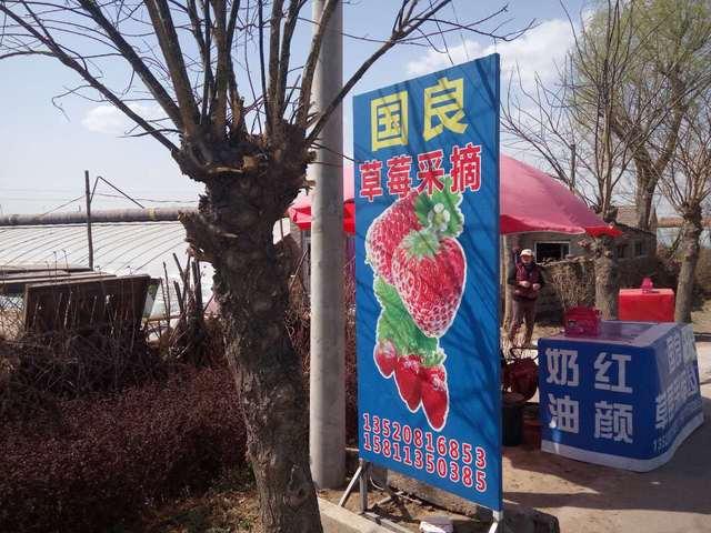 国良草莓采摘(宋庄店)