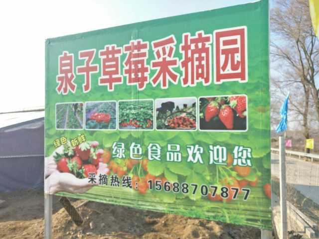 泉子草莓采摘园