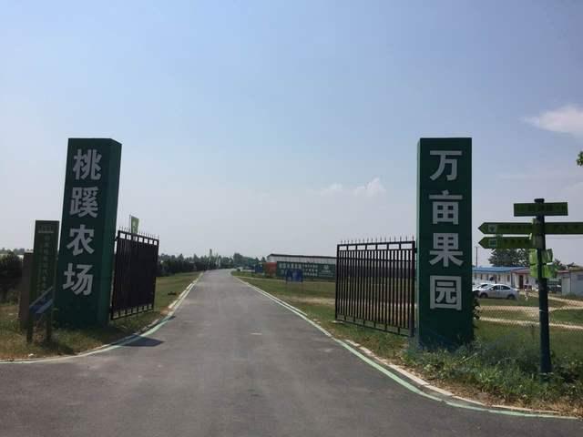 桃蹊农场滨湖葡萄基地