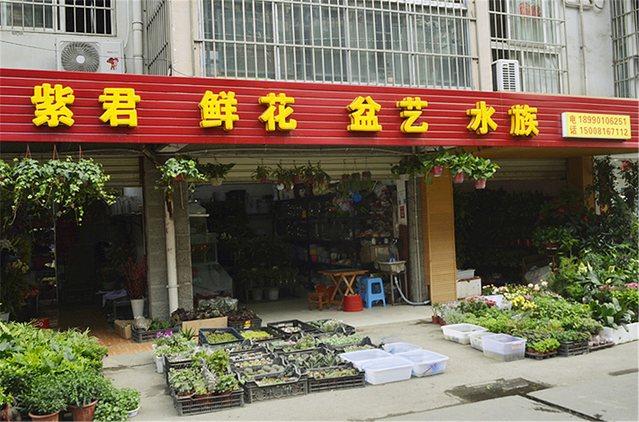 紫君鲜花盆艺水族