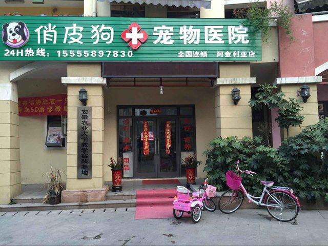 俏皮狗宠物医院(阿奎利亚店)