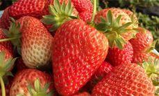福缘草莓采摘园50元代金券