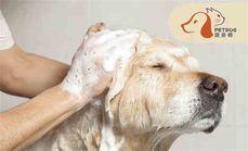 派多格小型犬洗澡套餐