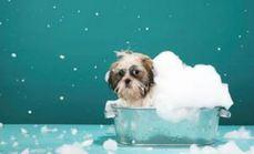 萌宠之家小型犬洗澡套餐