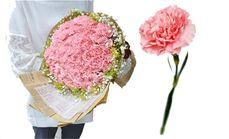 栀子花坊33支康乃馨花束