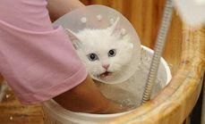 萌宠之家宠物猫洗澡套餐