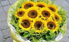 卉香园9支向日葵花束