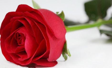 118 价值 288查看详情 0人已购 【潍坊学院】幽兰花艺3支红玫瑰套餐