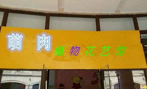 萌肉植物花艺馆