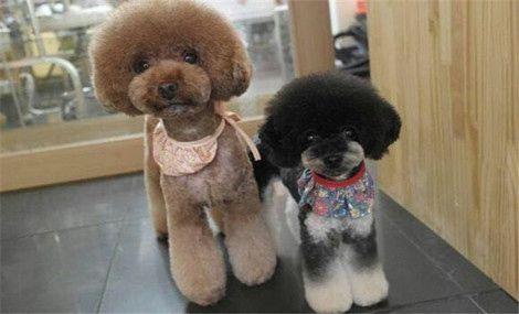 棉宝宠物美容馆