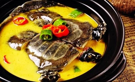 甲鱼私房菜