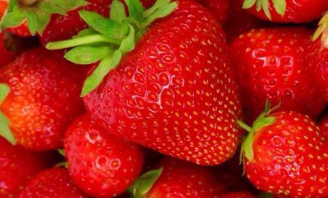 玉兰香梅草莓自助采摘园