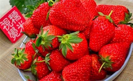 孙传清草莓采摘园