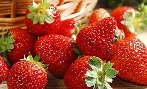 老袁草莓园