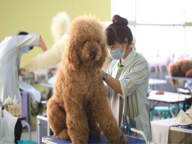 雷米高·天津坤腾宠物美容培训学校