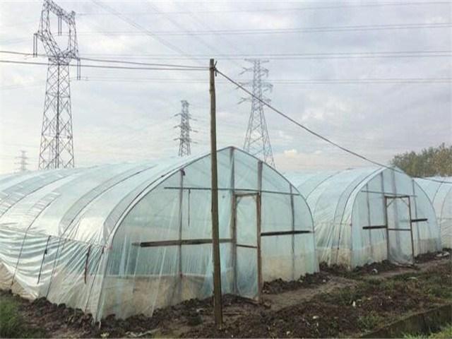 手拉手草莓园