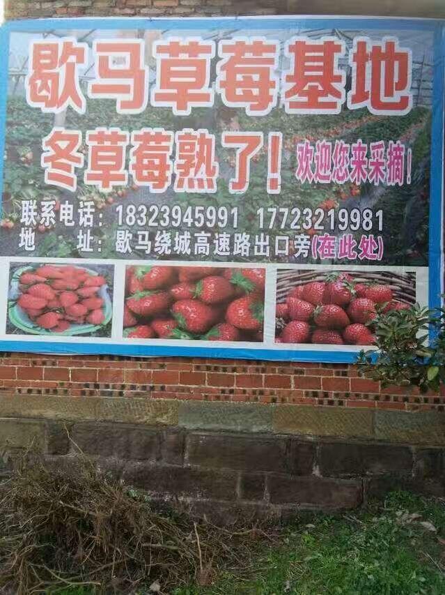 笑笑草莓园