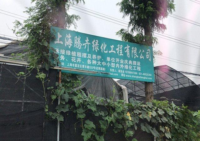 腾卉绿化工程